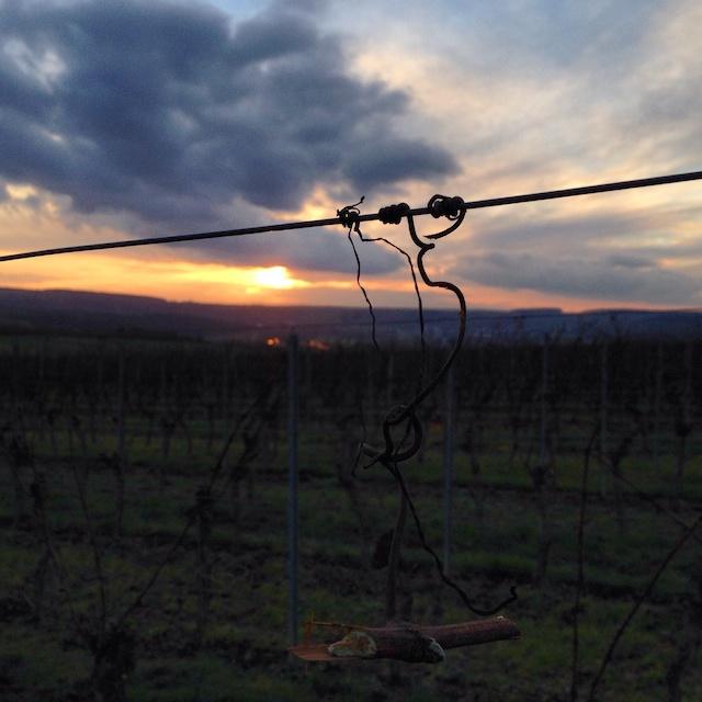 Sonnenuntergang im Weinberg bei Stammheim