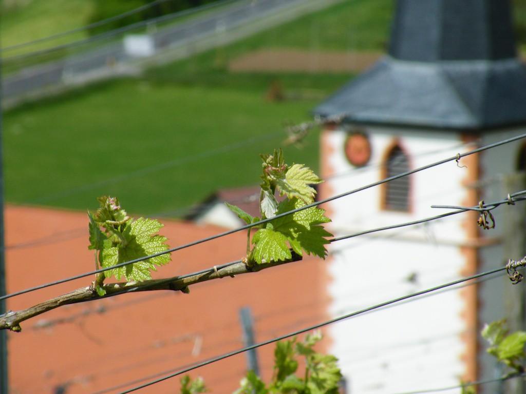Weinberge in Stammheim am Main - Weingut Wein von 3
