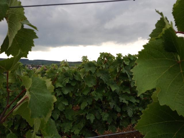 Gern gesehene Regenwolken nach der Dürrephase im Weinberg