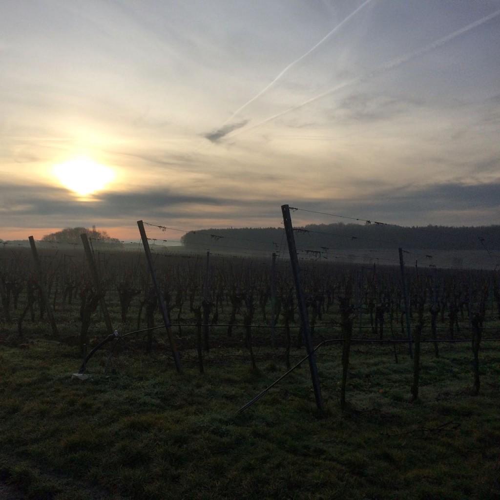 Wein von 3 Weinberge im Februar