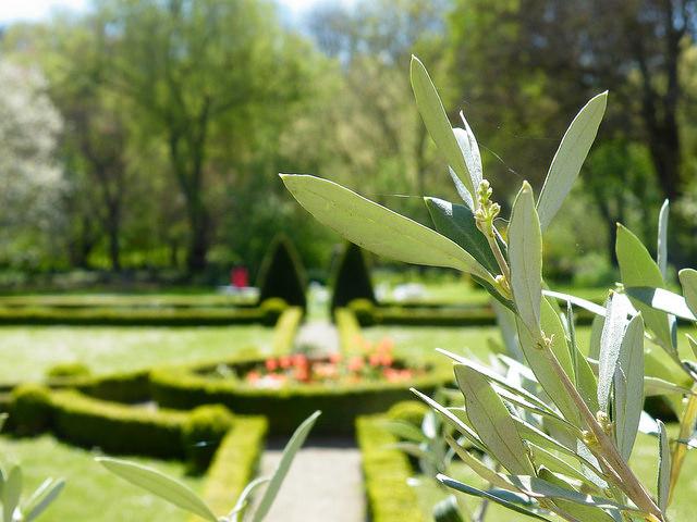 Schlossgarten Zeilitzheim - Gartenführung
