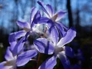 Blaue Blüten Foto Eberhardt Ott